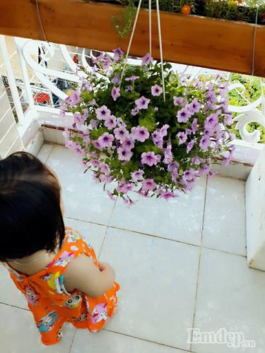 San thuong 8m2 phu xanh du loai rau cua me 9X tai Vung Tau-Hinh-6