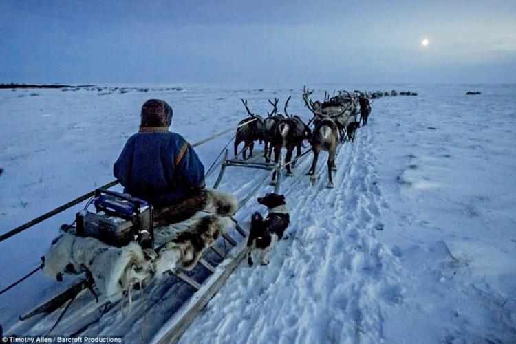 Cuoc song trong cai lanh thau xuong cua nguoi Nenets o Siberia-Hinh-10