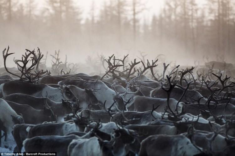 Cuoc song trong cai lanh thau xuong cua nguoi Nenets o Siberia-Hinh-12
