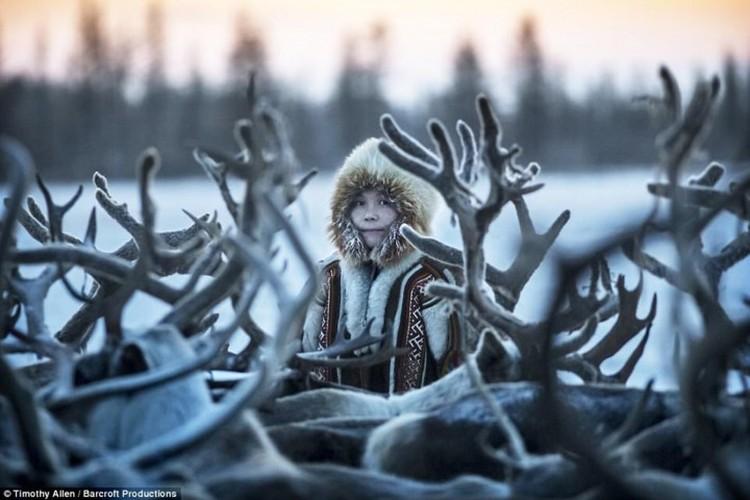 Cuoc song trong cai lanh thau xuong cua nguoi Nenets o Siberia-Hinh-4