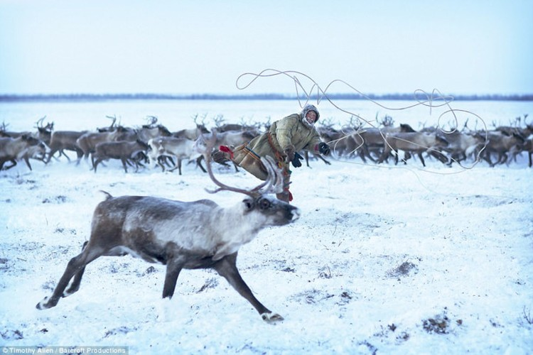 Cuoc song trong cai lanh thau xuong cua nguoi Nenets o Siberia-Hinh-6