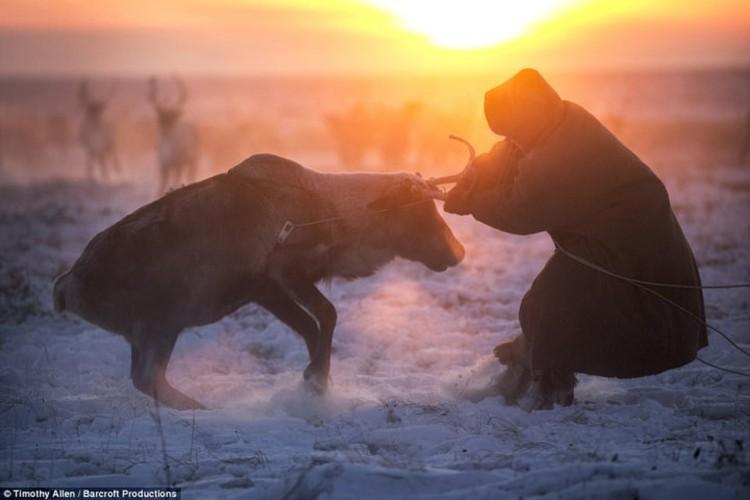 Cuoc song trong cai lanh thau xuong cua nguoi Nenets o Siberia-Hinh-8