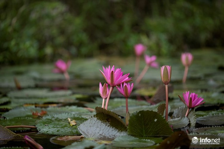 Khong duoc mua, hoa sung van khien Suoi Yen dep mong mo-Hinh-10