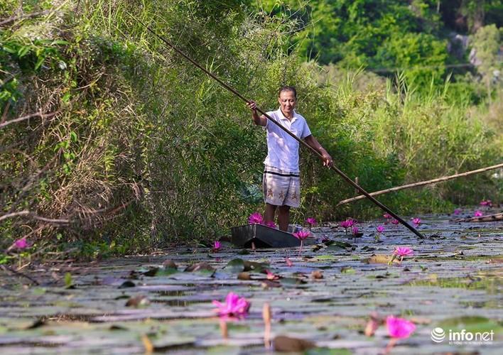 Khong duoc mua, hoa sung van khien Suoi Yen dep mong mo-Hinh-2