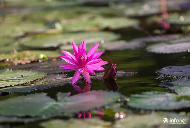 Khong duoc mua, hoa sung van khien Suoi Yen dep mong mo-Hinh-3