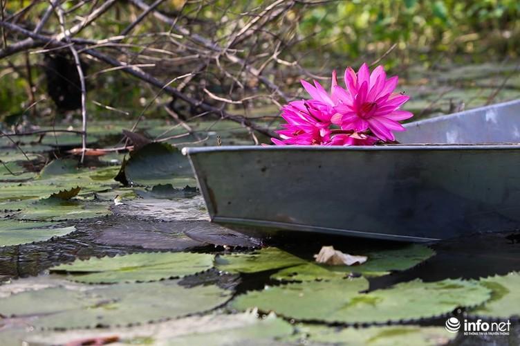 Khong duoc mua, hoa sung van khien Suoi Yen dep mong mo-Hinh-5