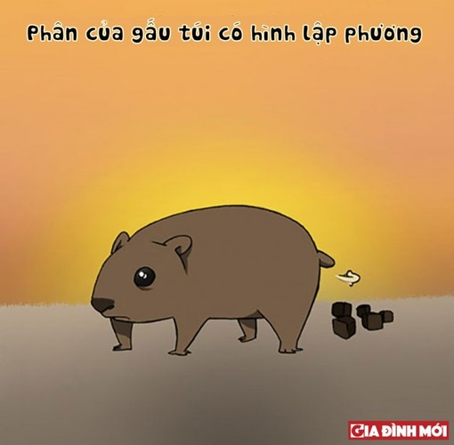 10 su that thu vi co the ban chua biet ve cac con vat-Hinh-2