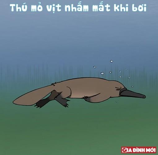10 su that thu vi co the ban chua biet ve cac con vat-Hinh-5