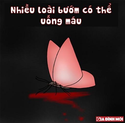 10 su that thu vi co the ban chua biet ve cac con vat-Hinh-6