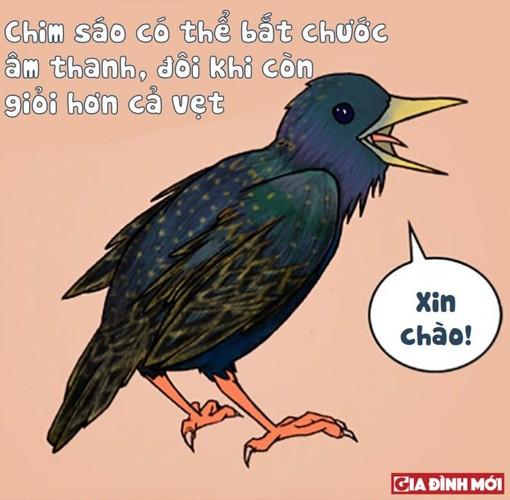 10 su that thu vi co the ban chua biet ve cac con vat-Hinh-8