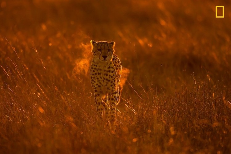 Chiem nguong thien nhien dep me hon qua anh National Geographic-Hinh-10