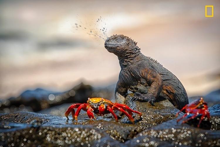 Chiem nguong thien nhien dep me hon qua anh National Geographic-Hinh-2