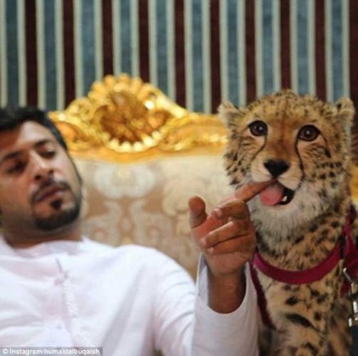 He lo su that ve thanh pho Dubai giau co nuc tieng-Hinh-9