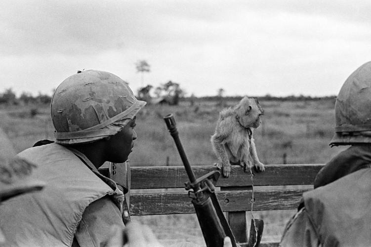 "Voi linh My: Chien tranh Viet Nam ""cang"" gap 6 lan CTTG 2-Hinh-9"