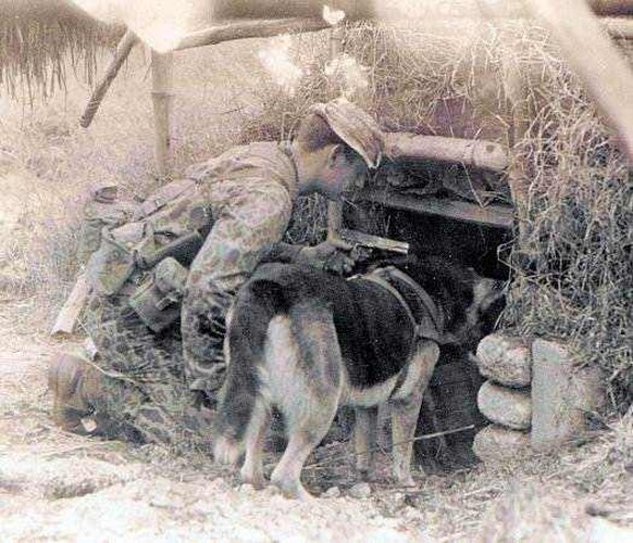 Giải mã đội quân K9 của Mỹ trong chiến tranh Việt Nam