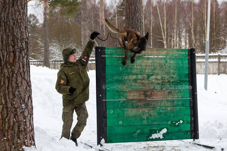 Mục kích chó nghiệp vụ Nga huấn luyện dưới cái lạnh -20 độ