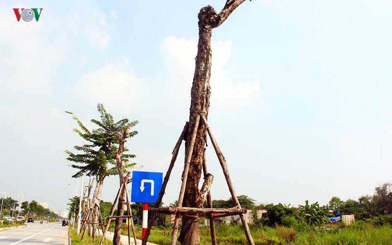 Anh: Bat thuong cay chet kho tren con duong 1.543 ty-Hinh-4