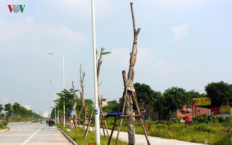 Anh: Bat thuong cay chet kho tren con duong 1.543 ty-Hinh-5