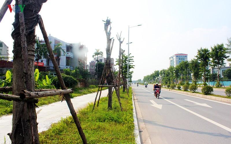 Anh: Bat thuong cay chet kho tren con duong 1.543 ty-Hinh-9