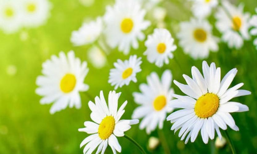 Doan chuan tinh cach qua so thich cac loai hoa