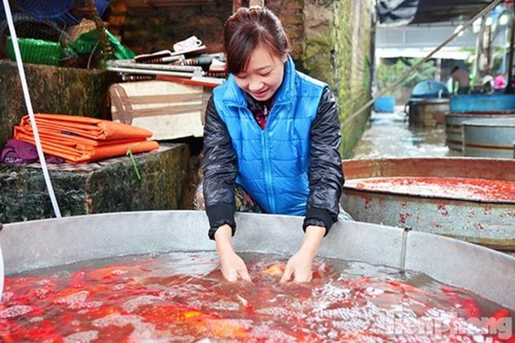 Tap nap cho ca ong Cong, ong Tao lon nhat Ha Noi-Hinh-4