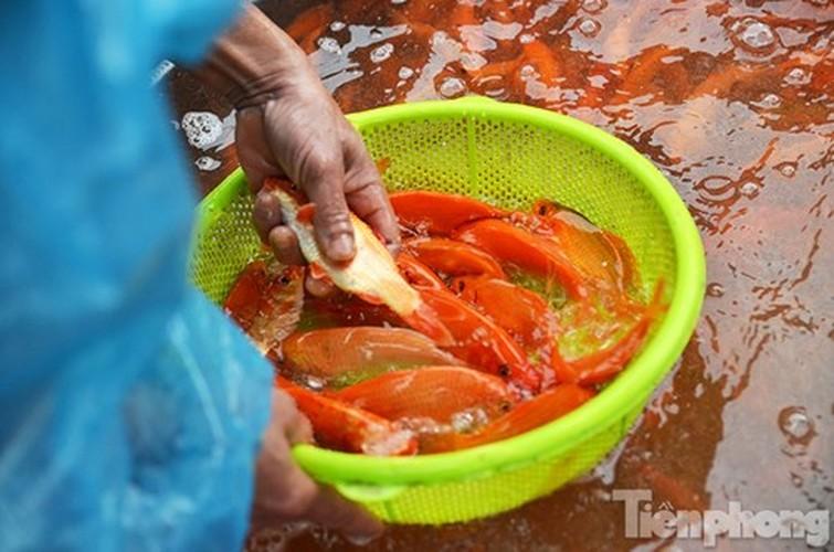Tap nap cho ca ong Cong, ong Tao lon nhat Ha Noi-Hinh-9