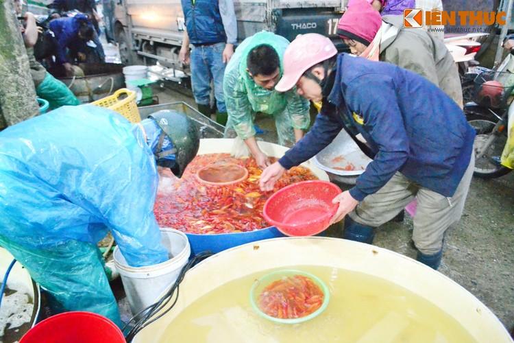 Cho ca lon nhat Ha Noi tap nap truoc ngay cung ong Cong ong Tao-Hinh-13