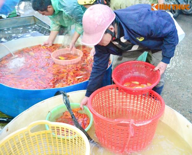 Cho ca lon nhat Ha Noi tap nap truoc ngay cung ong Cong ong Tao-Hinh-14