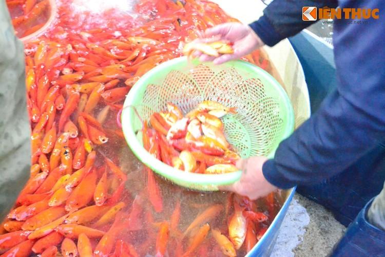 Cho ca lon nhat Ha Noi tap nap truoc ngay cung ong Cong ong Tao-Hinh-15