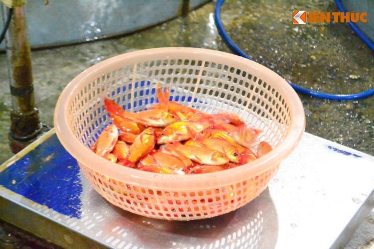 Cho ca lon nhat Ha Noi tap nap truoc ngay cung ong Cong ong Tao-Hinh-5
