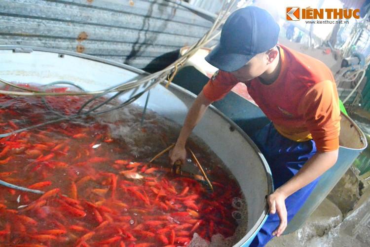 Cho ca lon nhat Ha Noi tap nap truoc ngay cung ong Cong ong Tao-Hinh-6