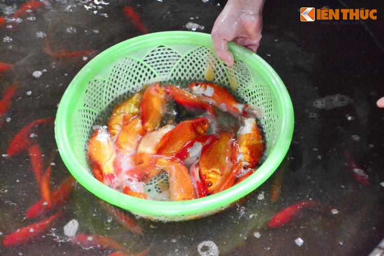 Cho ca lon nhat Ha Noi tap nap truoc ngay cung ong Cong ong Tao-Hinh-8