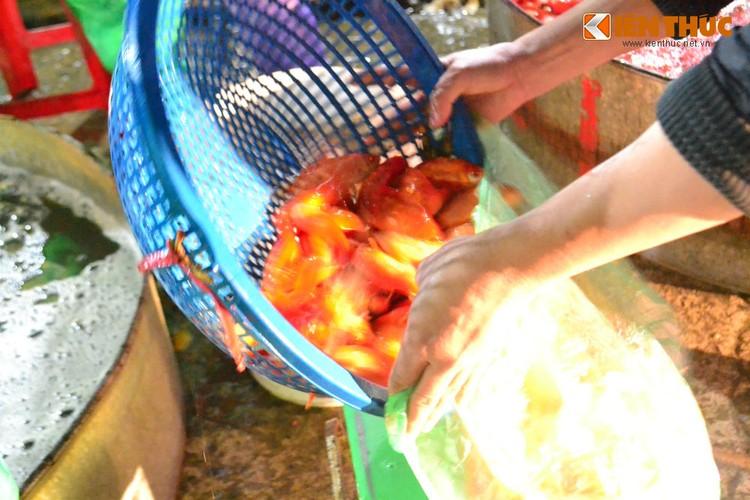 Cho ca lon nhat Ha Noi tap nap truoc ngay cung ong Cong ong Tao-Hinh-9