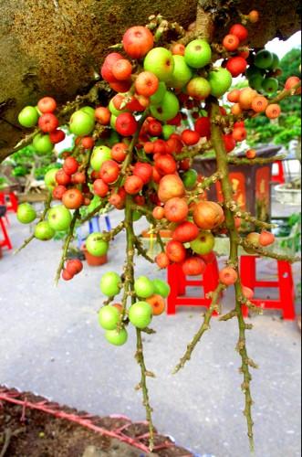 """Tan mat """"quai"""" sung doc di tram trieu xuong pho Ha Noi-Hinh-11"""