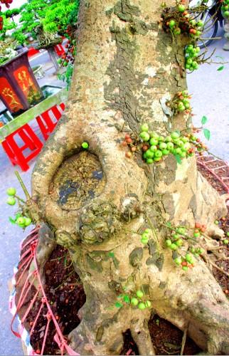 """Tan mat """"quai"""" sung doc di tram trieu xuong pho Ha Noi-Hinh-4"""