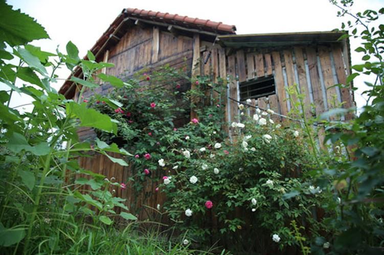 Man nhan nhung khu vuon hoa hong cua dai gia Viet-Hinh-11