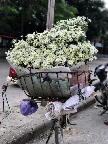 Mua cuc hoa mi: Chi em phat cuong, dan Nhat Tan mung tham-Hinh-10