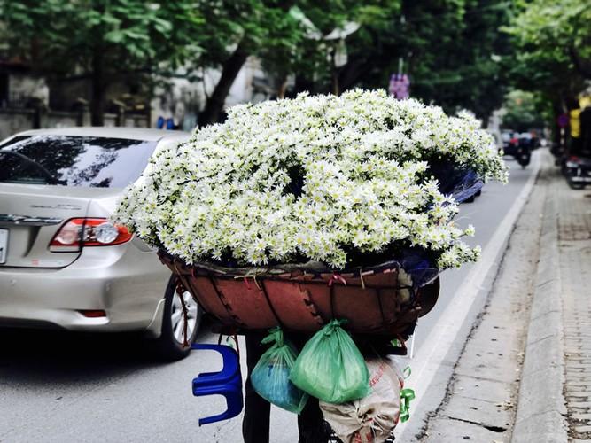 Mua cuc hoa mi: Chi em phat cuong, dan Nhat Tan mung tham-Hinh-11