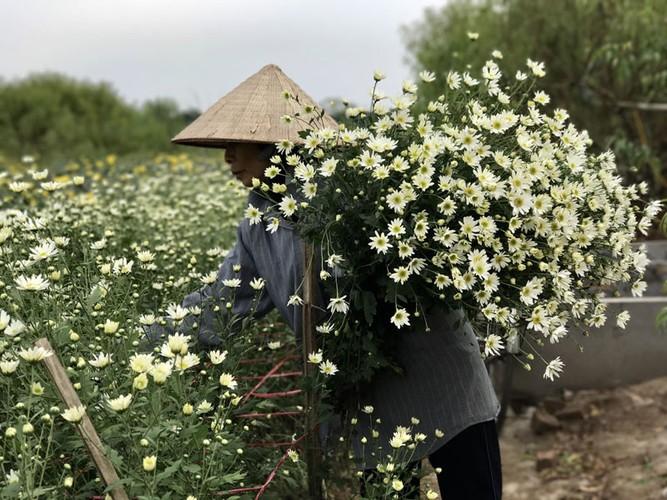 Mua cuc hoa mi: Chi em phat cuong, dan Nhat Tan mung tham-Hinh-16