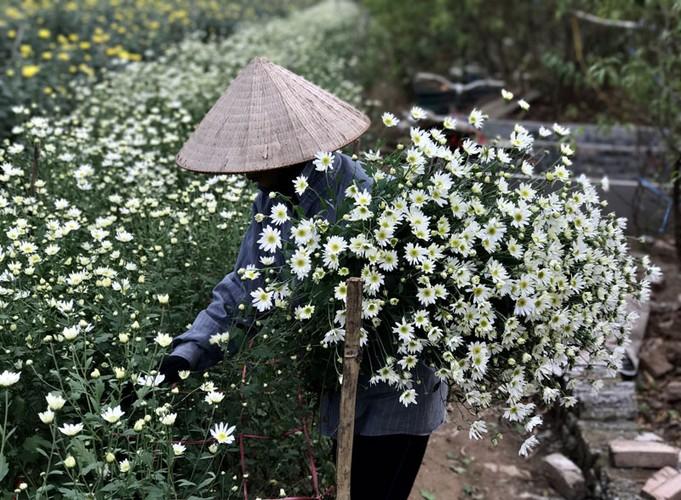 Mua cuc hoa mi: Chi em phat cuong, dan Nhat Tan mung tham-Hinh-8