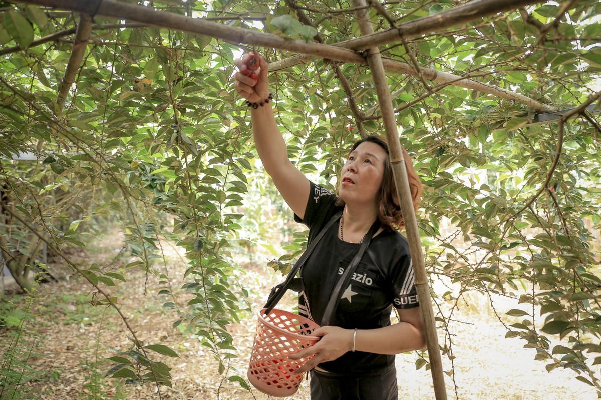 Nong dan ngoai thanh Ha Noi tat bat thu hoach nhot chin-Hinh-10