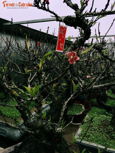 Dao That Thon gia nghin do chay hang truoc Tet Dinh Dau-Hinh-5