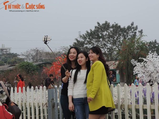 Xem vuon dao Nhat Tan hot bac dip can Tet-Hinh-2