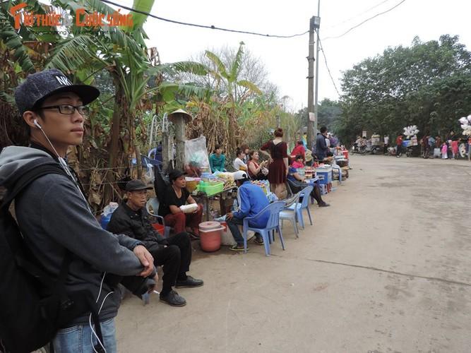 Xem vuon dao Nhat Tan hot bac dip can Tet-Hinh-8