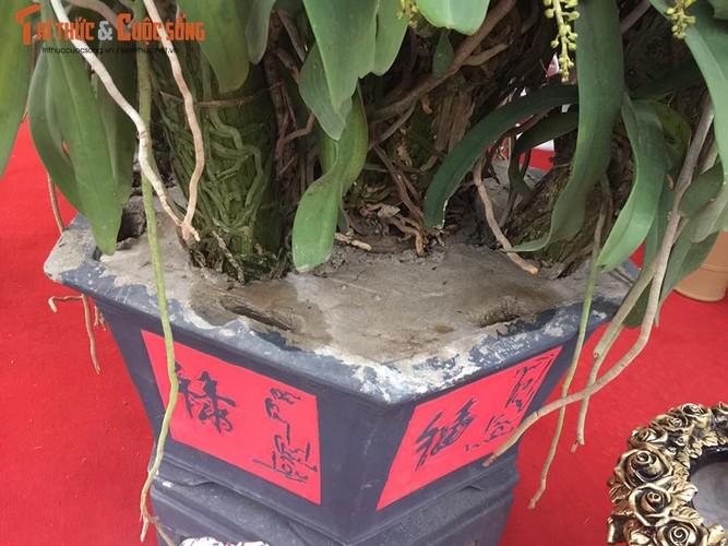 Da mat ngam lan dai chau rung tram trieu o Ha Noi-Hinh-6