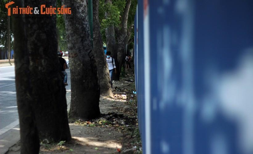 Ngam hang cay xanh muot tren duong Pham Van Dong truoc khi chat ha-Hinh-12