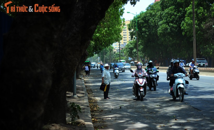 Ngam hang cay xanh muot tren duong Pham Van Dong truoc khi chat ha-Hinh-13