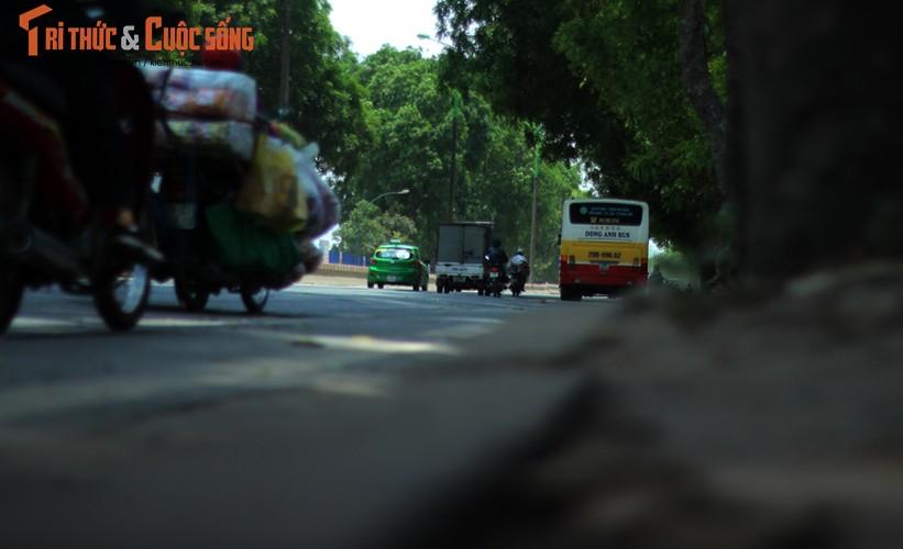 Ngam hang cay xanh muot tren duong Pham Van Dong truoc khi chat ha-Hinh-14