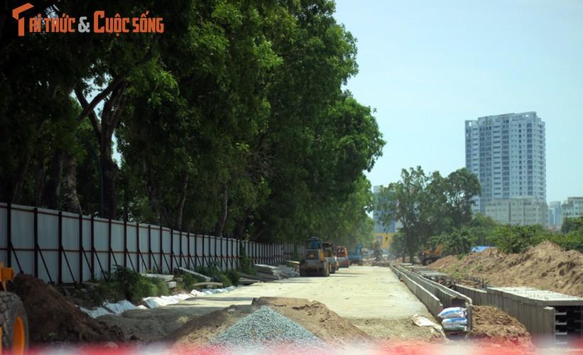 Ngam hang cay xanh muot tren duong Pham Van Dong truoc khi chat ha-Hinh-4