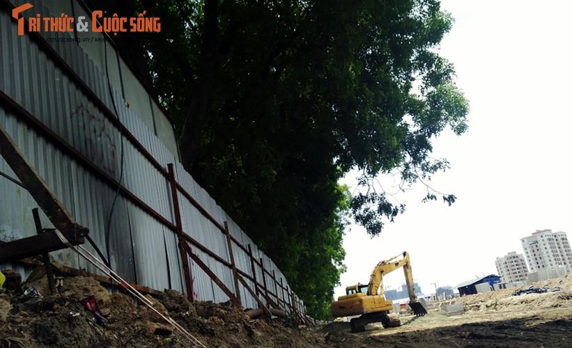 Ngam hang cay xanh muot tren duong Pham Van Dong truoc khi chat ha-Hinh-5